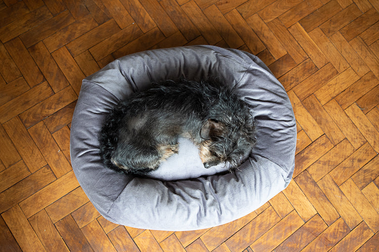 small grey dog bed