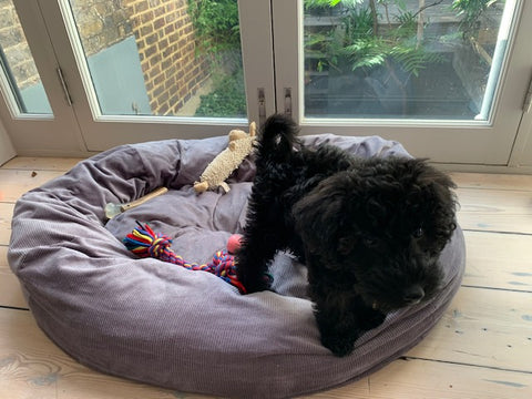 stuff your own dog bed