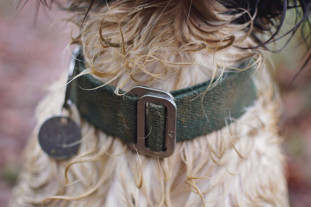 washable green dog collar