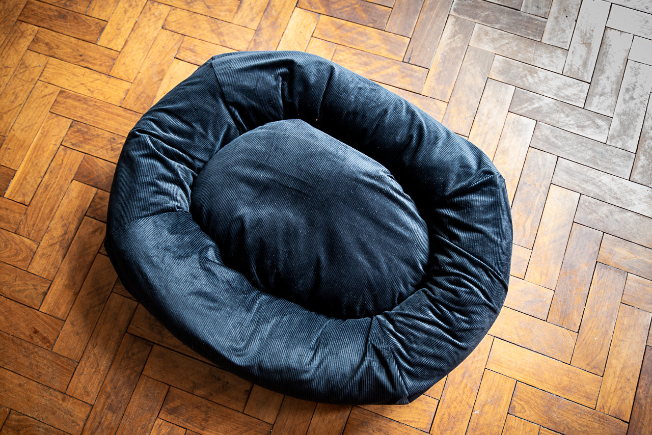black dog bed