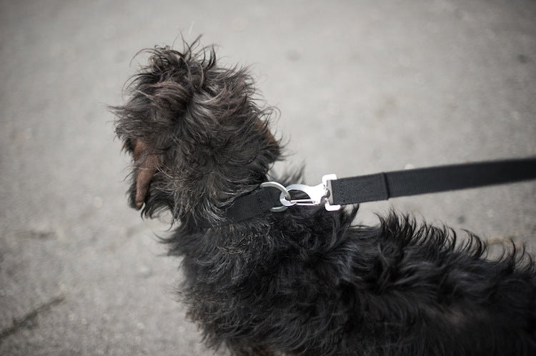 comfy black collar for small dog