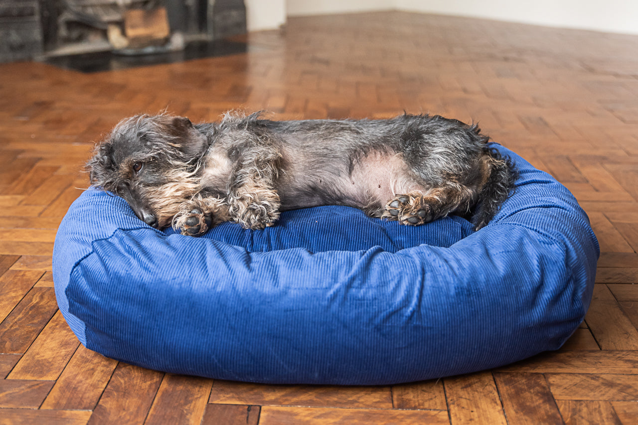 blue corduroy dog bed