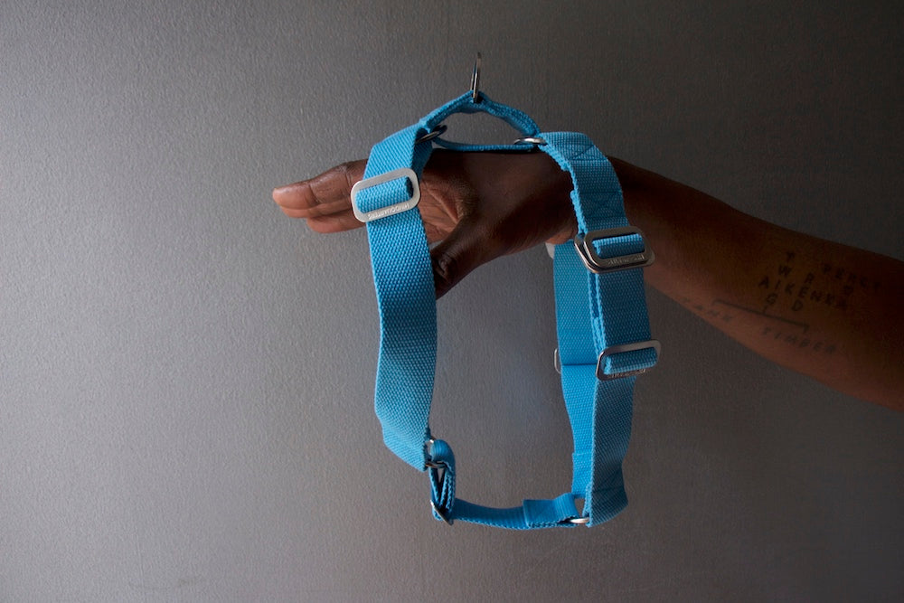 blue harness for dog