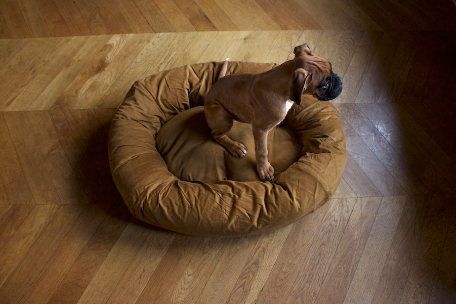 boxer puppy dog bed