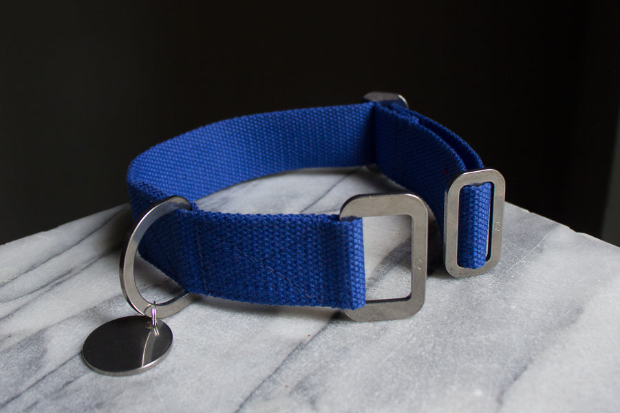cobalt blue dog collar with steel
