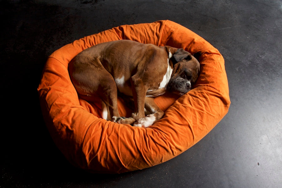 comfy orange dog bed