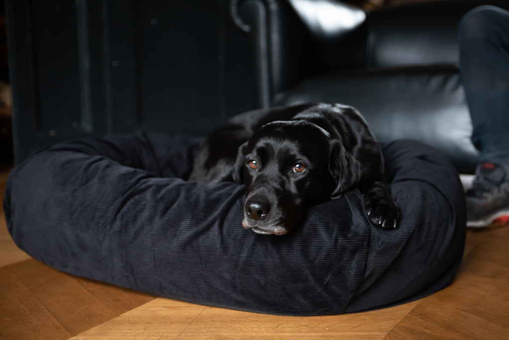 bed for black dog