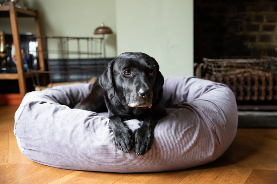 dog bed with washable removable covers