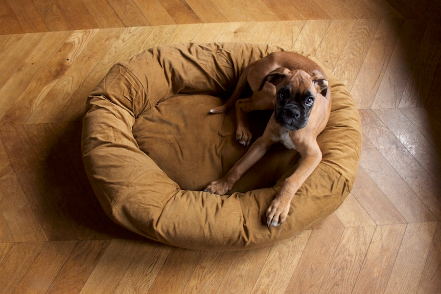 dog bed for puppy