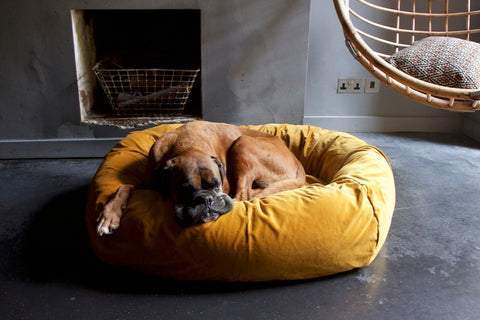 gold velvet dog bed