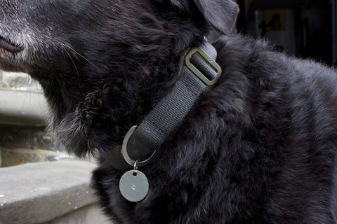 grey cotton fabric dog collar