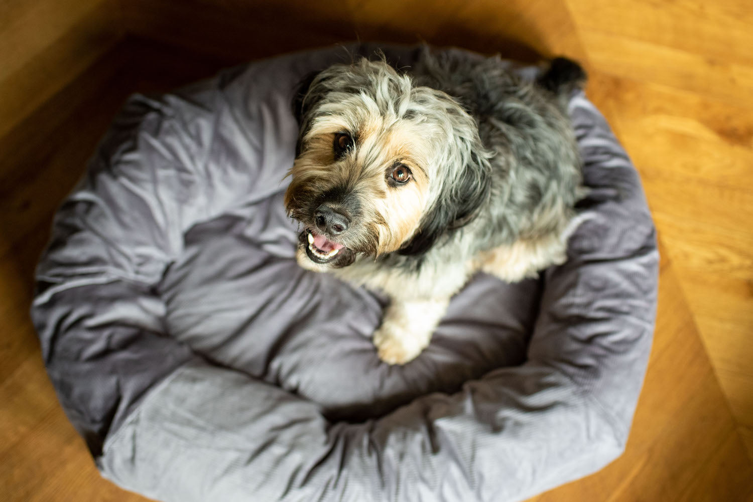 grey dog bed for cockapoo