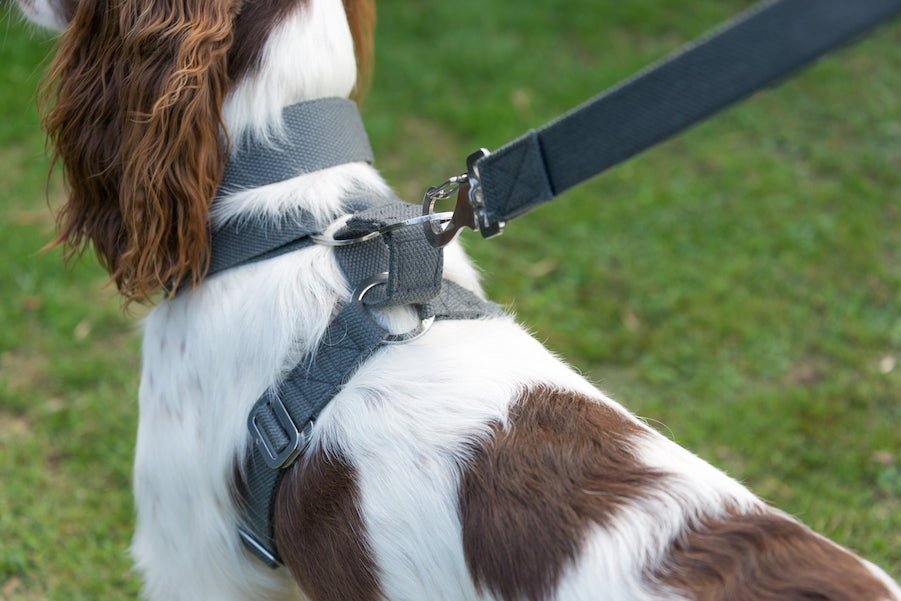 harness for a springer spaniel