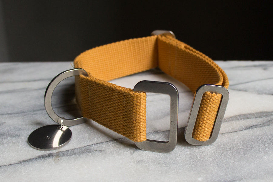 mustard dog collar with steel