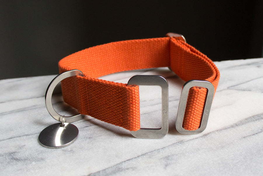 orange dog collar with steel