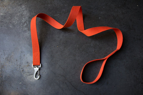 orange dog lead