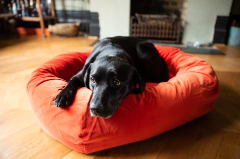 orange velvet dog bed