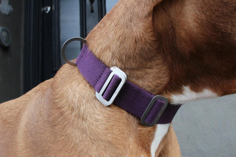 large purple dog collar