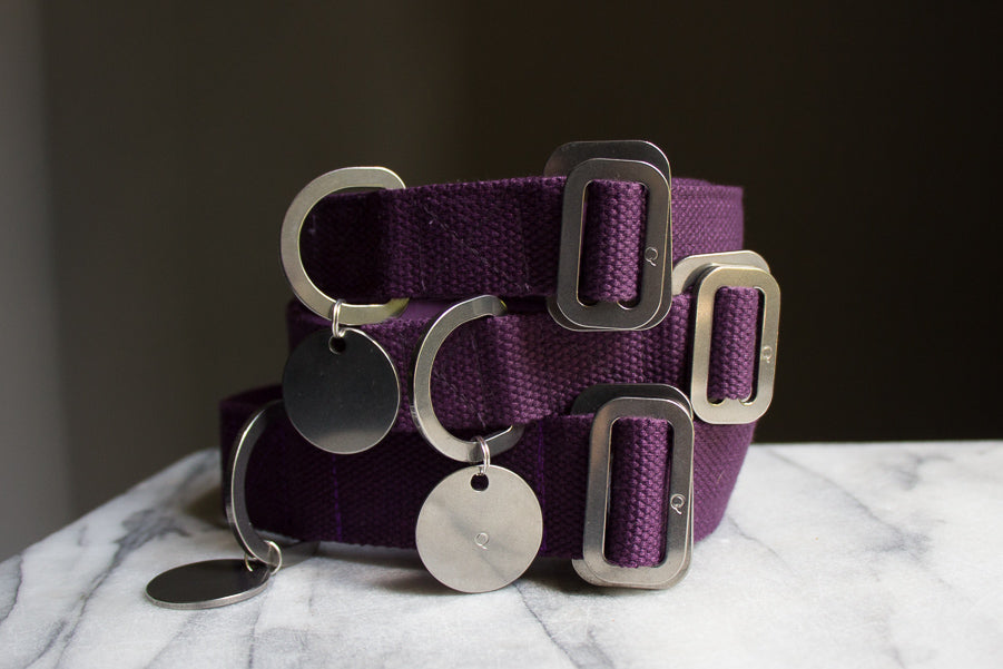 purple dog collars