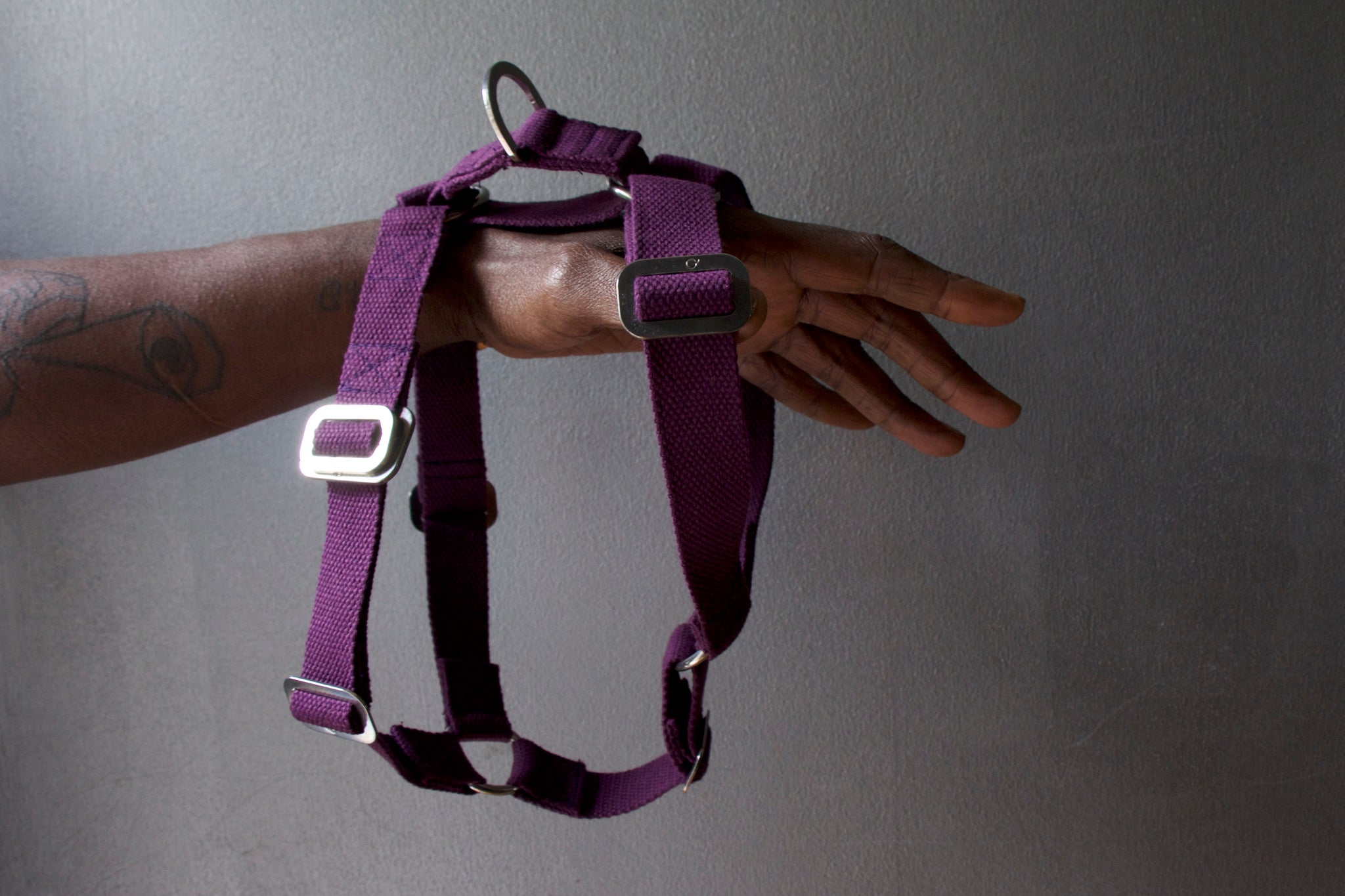 purple harness for dog