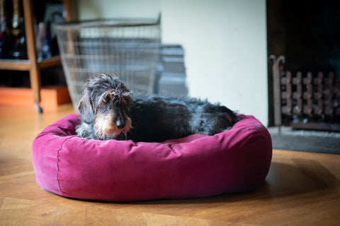 red bed for small dog