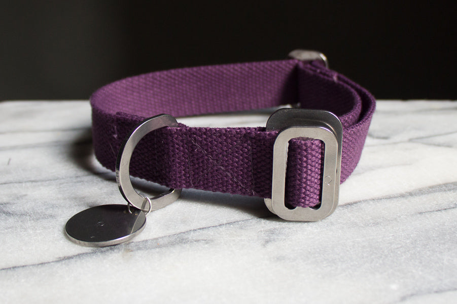 small purple dog collar