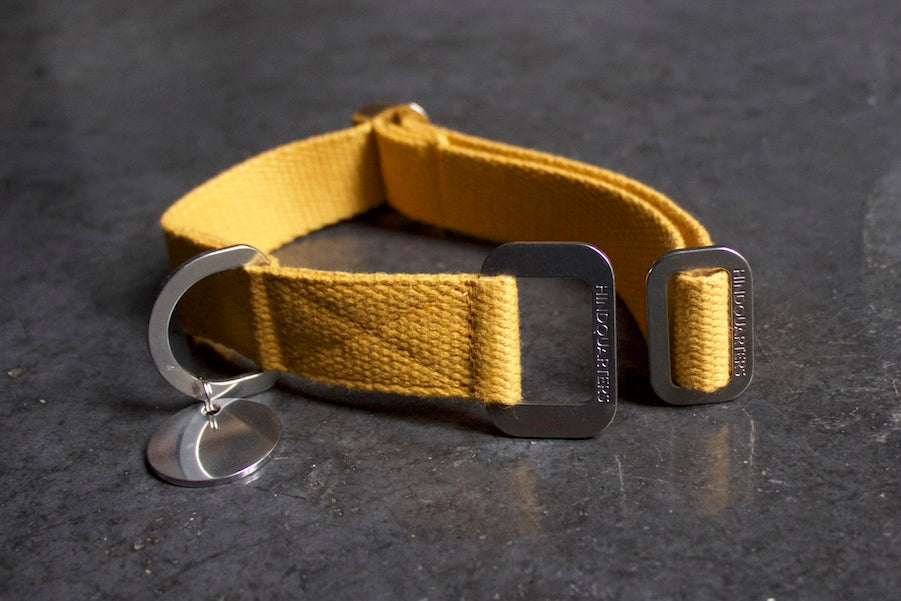 small yellow collar for dog