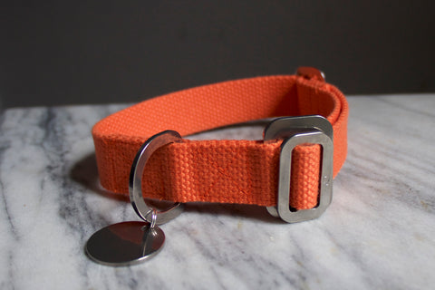 vibrant orange dog collar