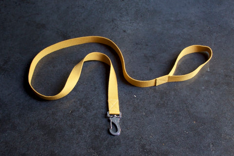 yellow dog lead