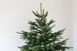 NEXT DELIVERY MONDAY 8 - BOOK NOW TO RESERVE Pot grown Nordmann Fir and Norway Spruce Christmas trees. For collection or delivery.