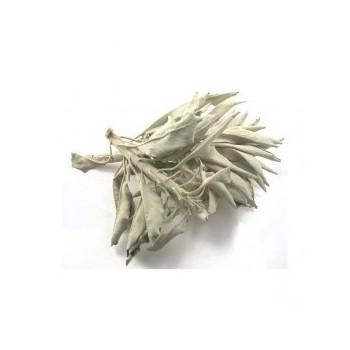 One Ounce Dried Sage Leafs - Mountain View Candle Works