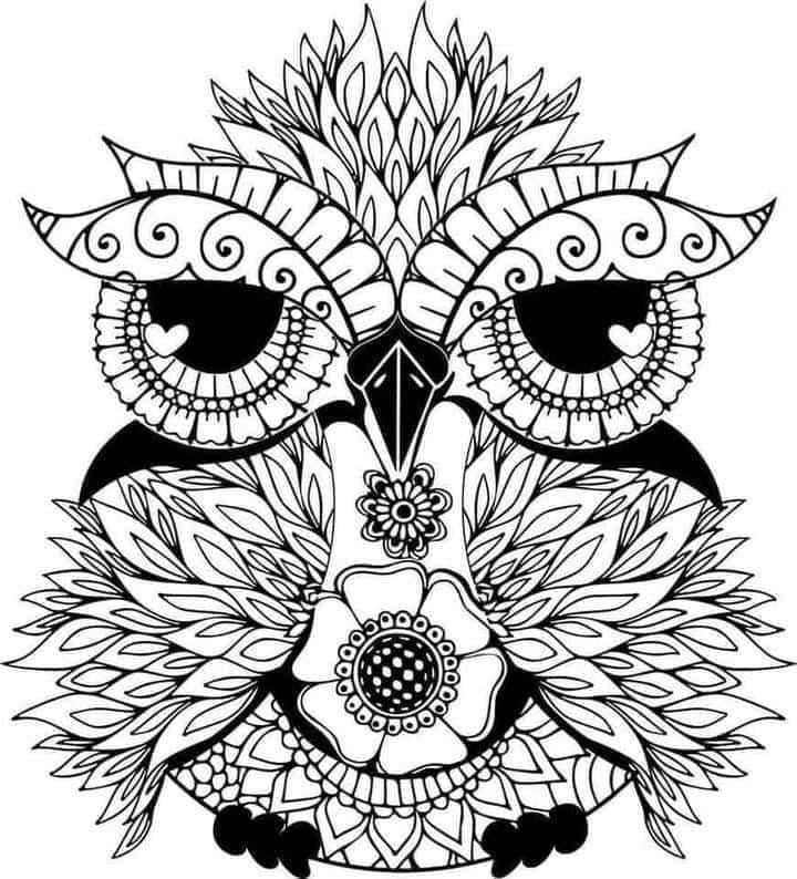 Flower Owl Decal