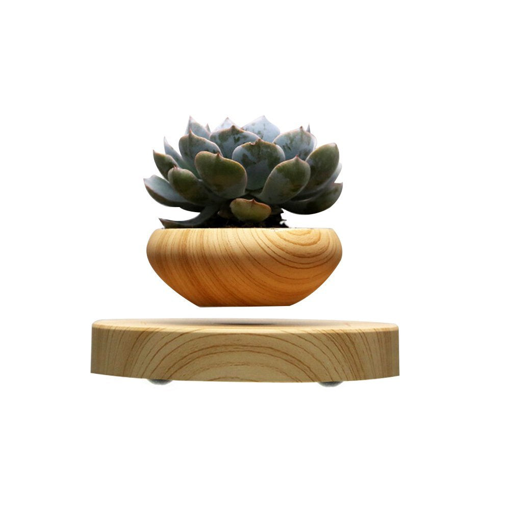 Floating Bonsai Plant Pot - Trending Curve