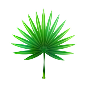 Saw Palmetto for Prostate Health