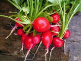RADISH, CHAMPION, HEIRLOOM, ORGANIC NON-GMO SEEDS, PERFECT SALAD RADISH - Country Creek LLC