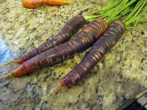 CARROT, PURPLE HAZE, HYBRID, ORGANIC 20+ SEEDS, UNUSUAL DELICIOUS AND SWEET