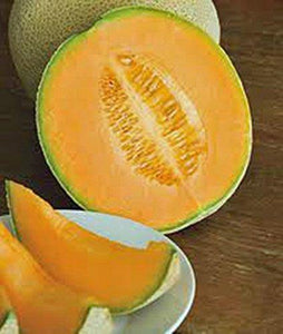 CANTALOUPE SEED, HALES BEST JUMBO, HEIRLOOM, ORGANIC, NON GMO,SEEDS, MELON - Country Creek LLC