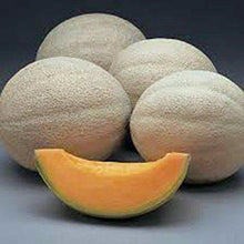 CANTALOUPE SEED, HALES BEST JUMBO, HEIRLOOM, ORGANIC, NON GMO, 100 SEEDS, MELON - Country Creek LLC