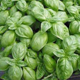 Basil Seeds , Sweet Genovese, Organic , NON GMO Seeds, Great All Around Basil, Makes Excellent Pesto - Country Creek LLC