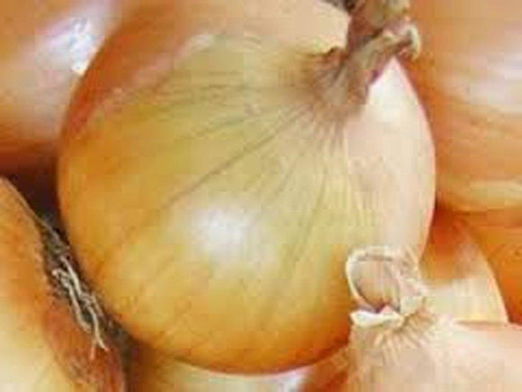 Onion Seeds , Texas Early Grano onion seeds, Heirloom, NON GMO Organic Seeds, Short Day, Vidiala Type - Country Creek LLC