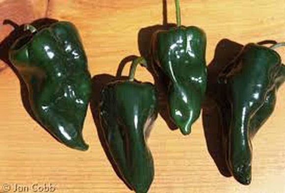 Pepper Seeds , Poblano Pepper seeds, Organic , NON GMO, seeds per pack, mild chili pepper originating in the state of Puebla, Mexico - Country Creek LLC
