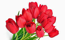 BULB, TULIP, RED IMPRESSION, PURE BRIGHT RED PERENNIAL TULIP BULBS (5 bulbs), RED FLOWERS - Country Creek LLC