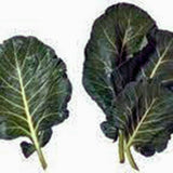 COLLARD GREENS, VATES, HEIRLOOM, ORGANIC NON GMO SEEDS, GREAT FOR SALADS, COOKING - Country Creek LLC