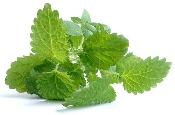 Lemon Balm Herb Seeds -  Non-GMO - a mild Lemon Aroma herb from The Mint Family, Used in teas and as Seasoning in Many Dishes. - Country Creek LLC