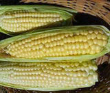 Corn Seed Garden Collection, Non GMO, Heirloom, Organic Seeds, 6 Top Varieties - Country Creek LLC