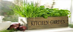 Herb Garden Collection, Small, Heirloom, Organic Seeds, 6 Top Varieties of Herbs - Country Creek LLC