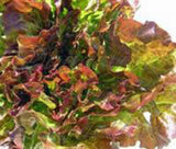 Lettuce Seed, Leaf Lettuce, Prizehead, Heirloom, NON-GMO Seeds - Country Creek LLC