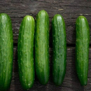 Poinsett 76 Cucumber Seeds  - Non-GMO - Fantastic raw in Salads or in Cool and Tangy Condiments. - Country Creek LLC