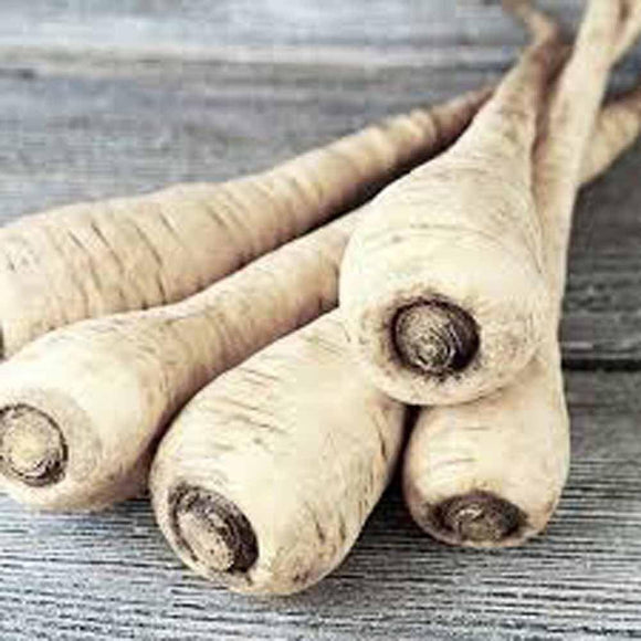 Parsnip, Hollow Crown Seeds, Organic, NON GMO Seeds ,Sweet white flesh has good flavor and keeps well over winter. - Country Creek LLC