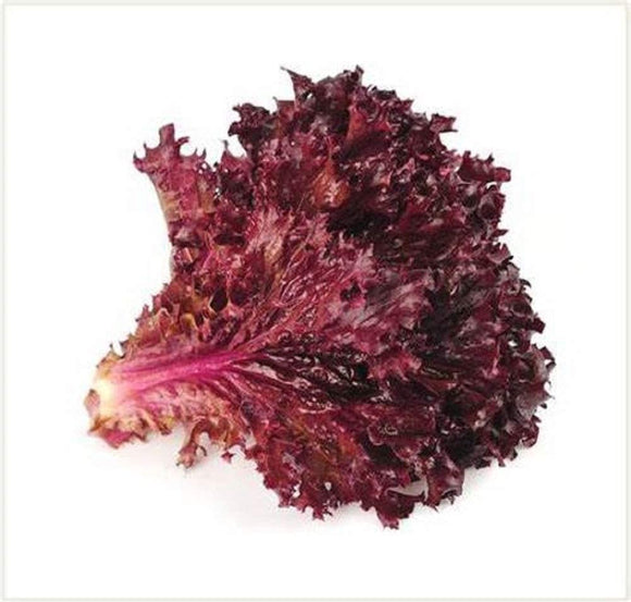 Ruby Red Lettuce Seeds - Non-GMO - A deep red Variety That is Excellent for garnishes and adds Beautiful Color to Salads. - Country Creek LLC
